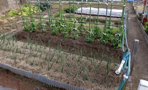 1-14.02.06 菜園.jpg
