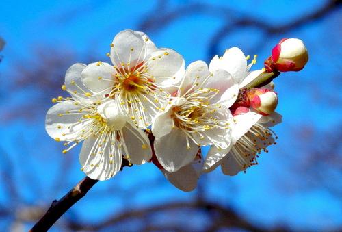 1-14.03.05 田辺梅林-9.jpg