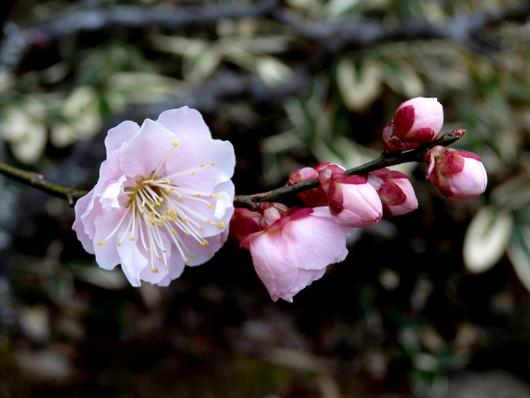1-14.03.18 観心寺-8.jpg
