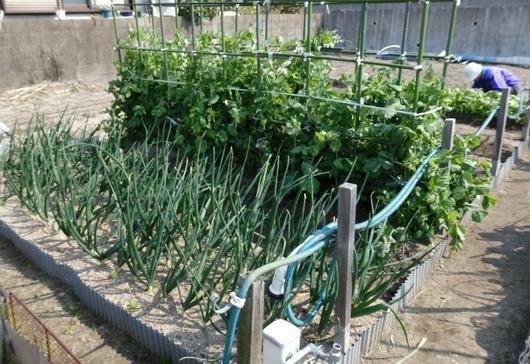 1-14.03.30 菜園-1.jpg