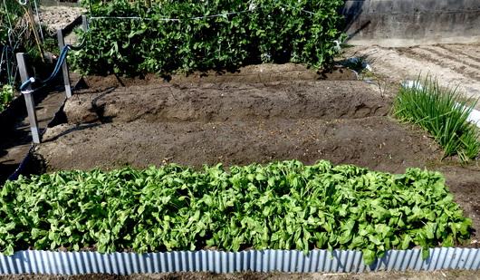 1-14.03.30 菜園-2.jpg