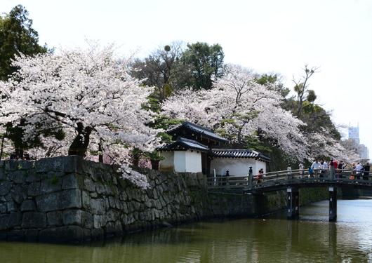 1-14.04.02 和歌山(城)公園の桜-1.jpg