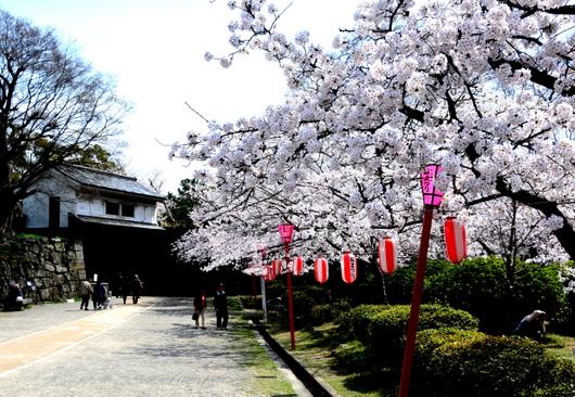 1-14.04.02 和歌山(城)公園の桜-3.jpg