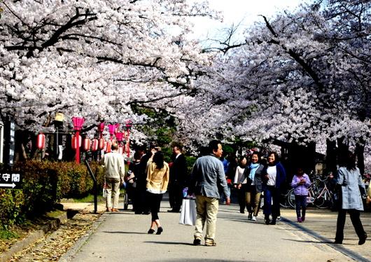 1-14.04.02 和歌山(城)公園の桜-4.jpg