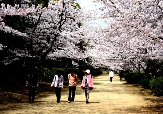 1-14.04.02 河西公園-1.jpg