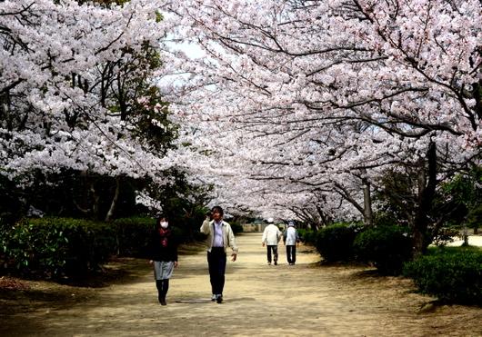 1-14.04.02 河西公園-2.jpg