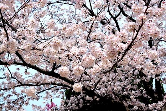 1-14.04.02 河西公園-3.jpg