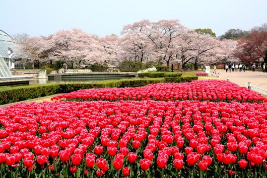 1-14.04.18 京都府立植物園-1.jpg