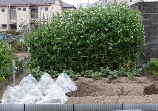 1-14.04.26 菜園-1.jpg