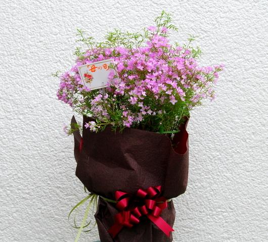 1-14.05.10 母の日プレデント.jpg