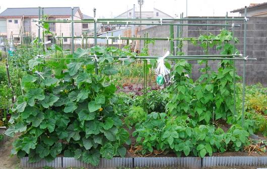 1-14.06.05 菜園-1.jpg