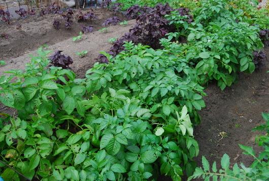 1-14.06.05 菜園-5.jpg