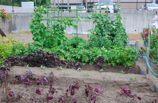 1-14.06.05 菜園-6.jpg