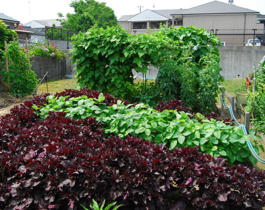 1-14.07.05 菜園-2.jpg