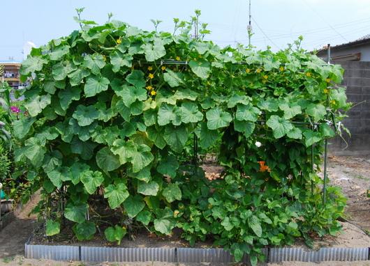 1-14.07.05 菜園-3.jpg