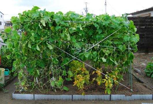 1-14.07.10 菜園-1.jpg