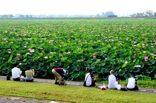 1-14.07.27 草津水性植物園-1.jpg