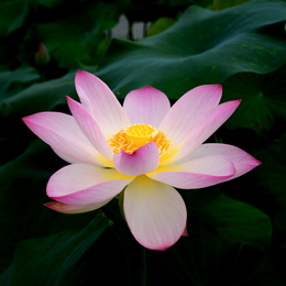 1-14.07.27 草津水性植物園-11.jpg