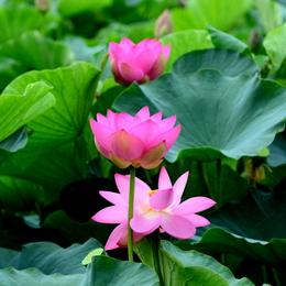 1-14.07.27 草津水性植物園-5.jpg
