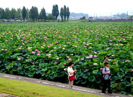 1-14.07.27 草津水性植物園-6.jpg