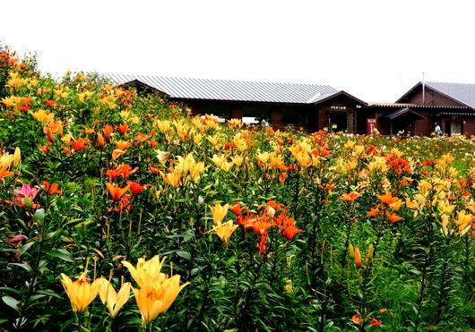 1-14.07.30 箱館山ゆり園-7.jpg