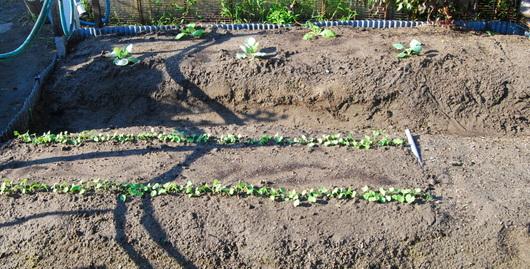 1-14.09.11 菜園-1.jpg