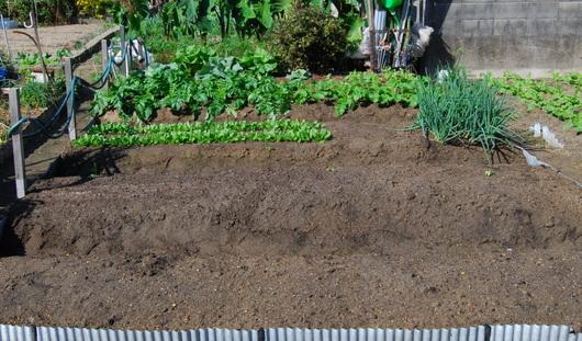 1-14.10.09 菜園-1.jpg