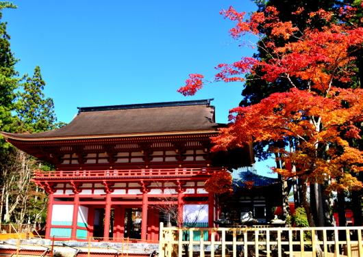 1-14.11.07 高野山紅葉-1.jpg