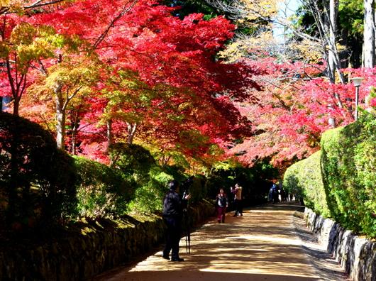 1-14.11.07 高野山紅葉-10.jpg