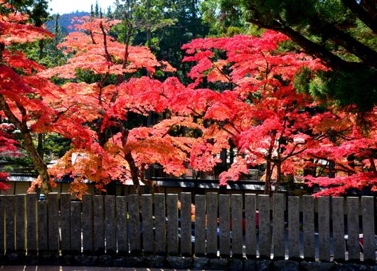 1-14.11.07 高野山紅葉-2.jpg