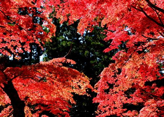 1-14.11.07 高野山紅葉-4.jpg