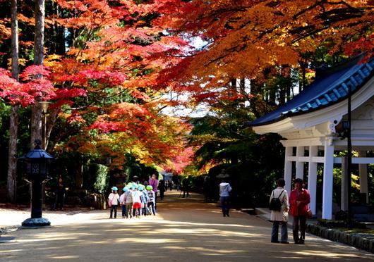 1-14.11.07 高野山紅葉-9.jpg