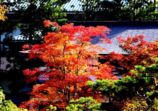 1-14.11.09 高野山紅葉-1.jpg