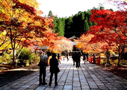 1-14.11.09 高野山紅葉-10.jpg