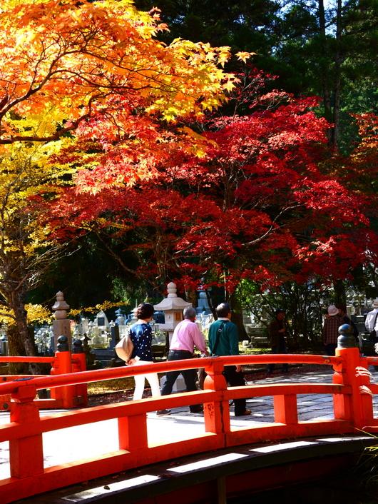 1-14.11.09 高野山紅葉-11.jpg