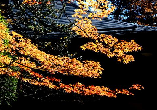 1-14.11.09 高野山紅葉-2.jpg