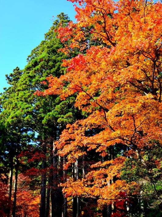 1-14.11.09 高野山紅葉-3.jpg