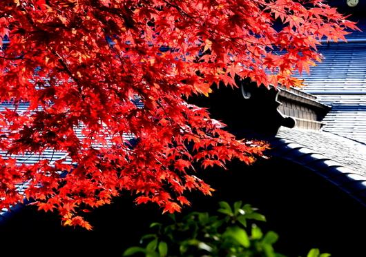 1-14.11.09 高野山紅葉-4.jpg