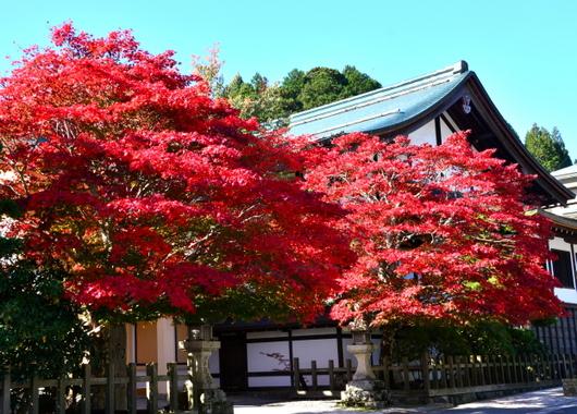 1-14.11.09 高野山紅葉-5.jpg