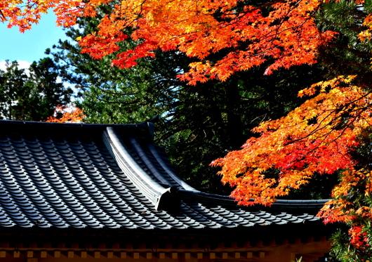 1-14.11.09 高野山紅葉-8.jpg