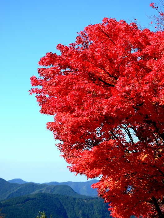 1-14.11.11 高野龍神スカイライン-5.jpg