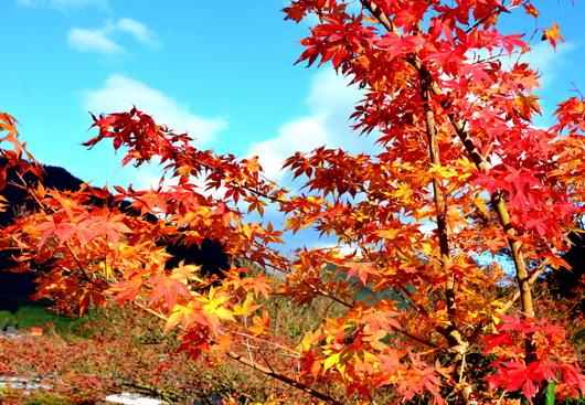 1-14.11.16 花の寺高源寺-4.jpg