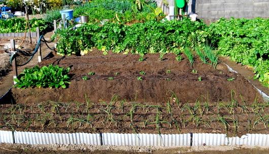 1-14.11.26 菜園-1.jpg