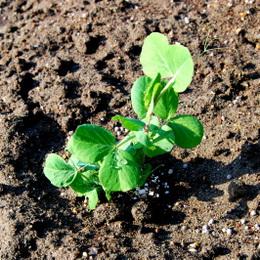 1-14.11.26 菜園-4.jpg