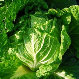 1-14.11.26 菜園-8.jpg