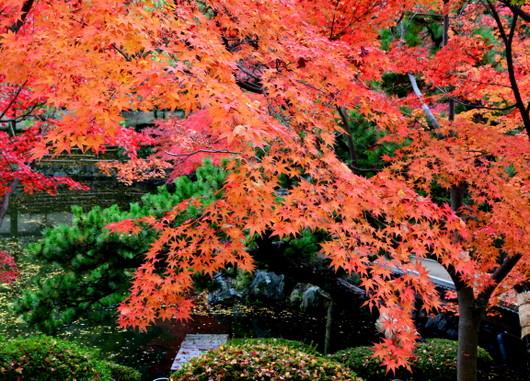 1-14.11.28 紅葉渓庭園-2.jpg