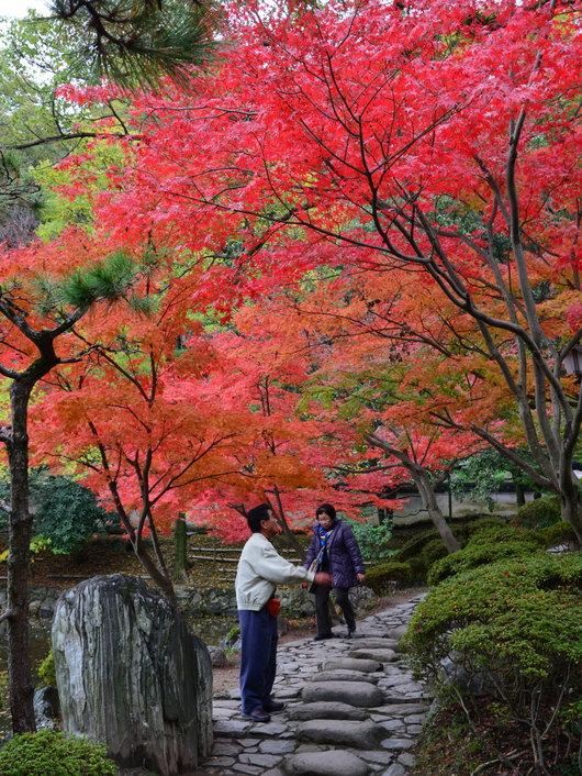 1-14.11.28 紅葉渓庭園-3.jpg