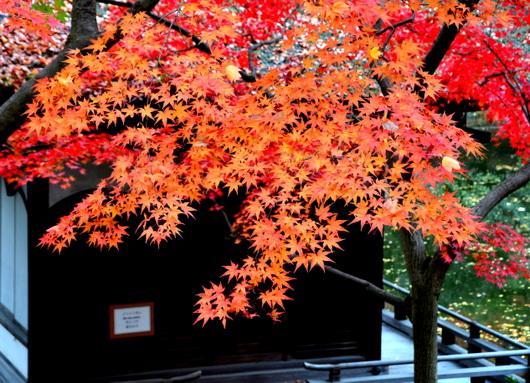 1-14.11.28 紅葉渓庭園-4.jpg