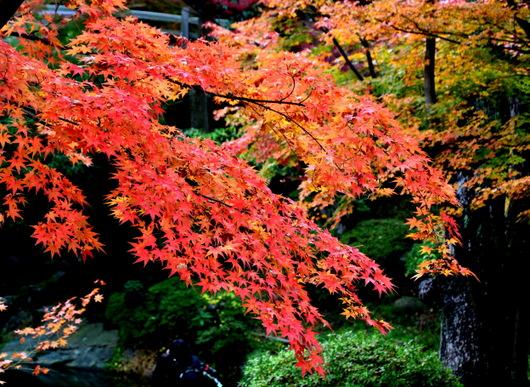 1-14.11.28 紅葉渓庭園-5.jpg