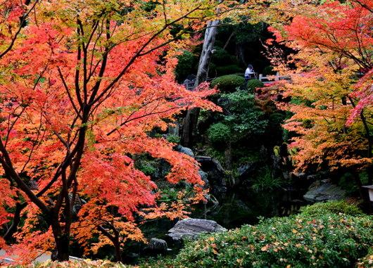 1-14.11.28 紅葉渓庭園-7.jpg